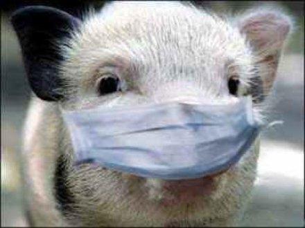 Нормативно-правовая база по африканской чуме свиней